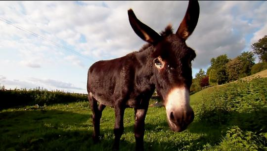 Animals at Work - S1E12 - Teddy Community Donkey