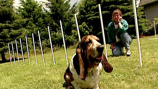 Animals at Work - S1E9 - Annie Basset Agility Athlete