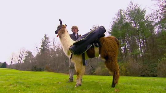 Animals at Work - S2E34 - Mocha Llama Golf Caddy
