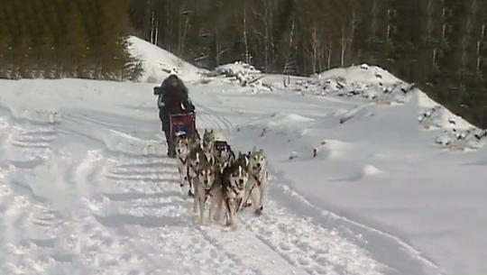Dogs With Jobs - E13 - Sled Dogs