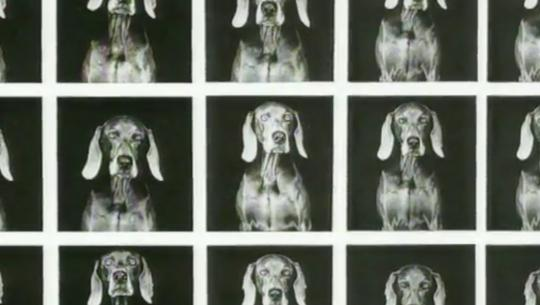 Dogs With Jobs - E22 - Fay Wray, Jake and Toby