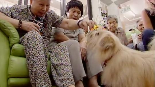 Dogs With Jobs - E50 - Eddie, Velino and Sir Lancelot