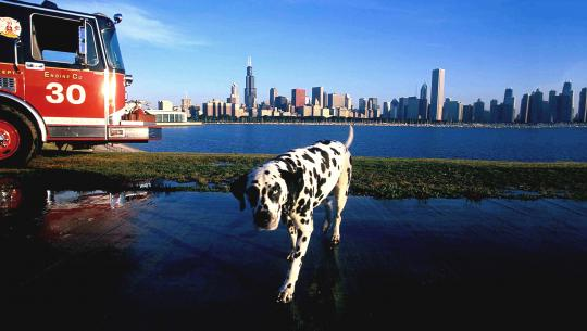 Dogs With Jobs - E51 - Vera, Joe Cowboy and Thirty