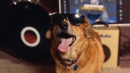 Dogs With Jobs - E55 - Zoro, Suzy Q and Sven