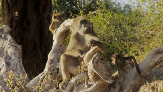 Great Parks of Africa - E6 - Chobe Land of Learning