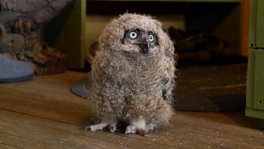 Hope for Wildlife - S6E3 - Owl Be There