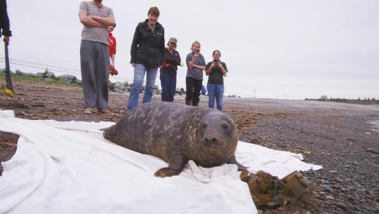 Hope for Wildlife - S8E2 - Chunk the Seal