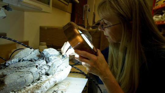 Museum Diaries - E4 - Dinos Rediscovered