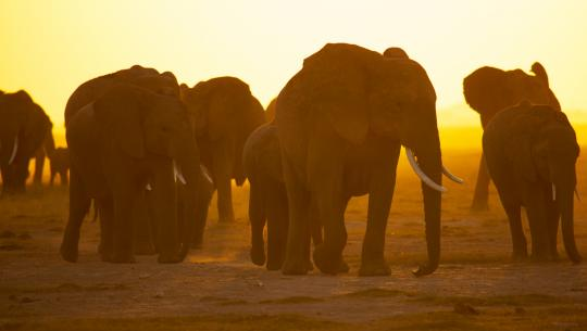 National Geographic Specials -  Battle for the Elephants