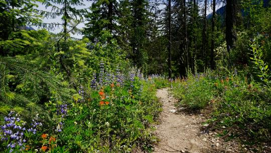 National Geographic Specials - Pacific Crest Trail