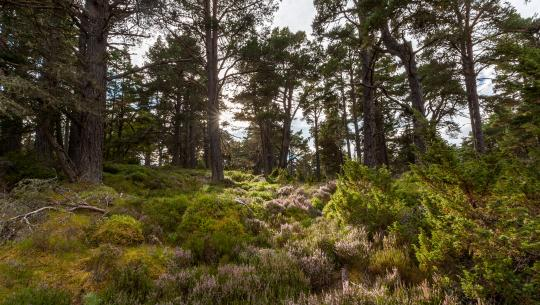 Wild Britain with Ray Mears - S2E1 - Caledonian Pine Forest: Scotland