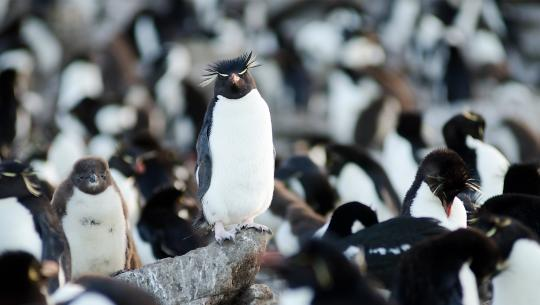 Wildest Islands - S2E5 - Falkland Islands: Penguin Paradise