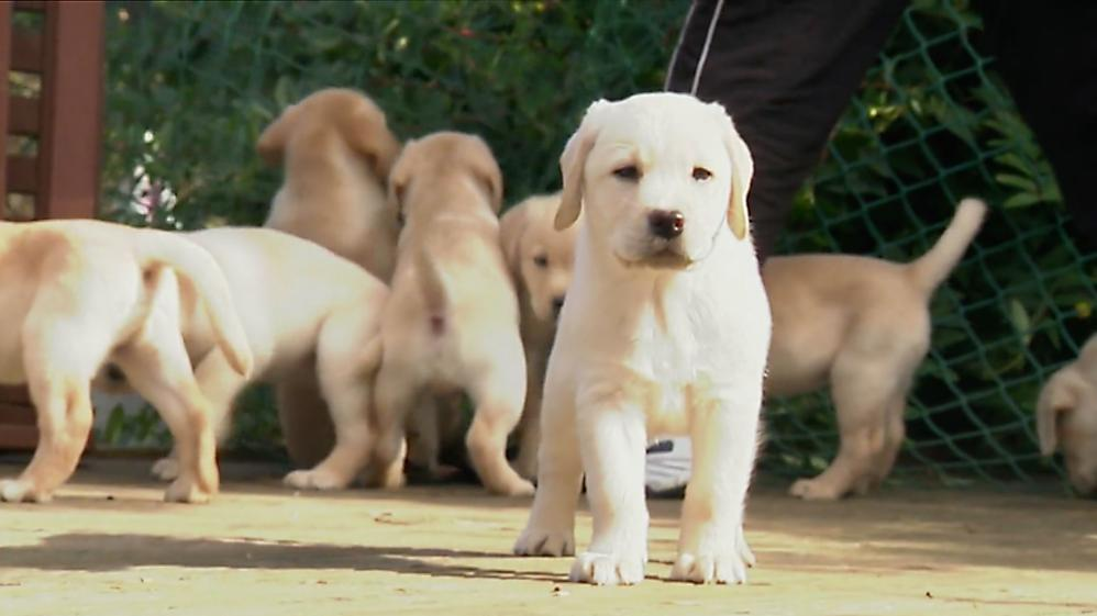 Animals at Work - S1E16 - Litter Model Puppies
