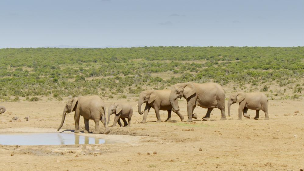 Great Parks of Africa - E1 - Addo Elephant National Park