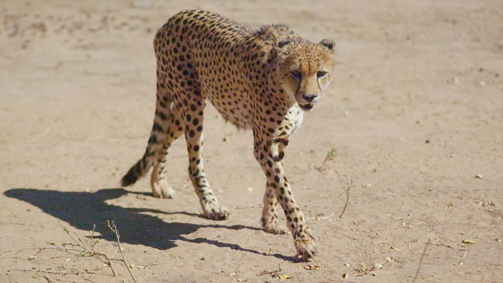 Great Parks of Africa - E5 - Kgalagadi Transfrontier Park