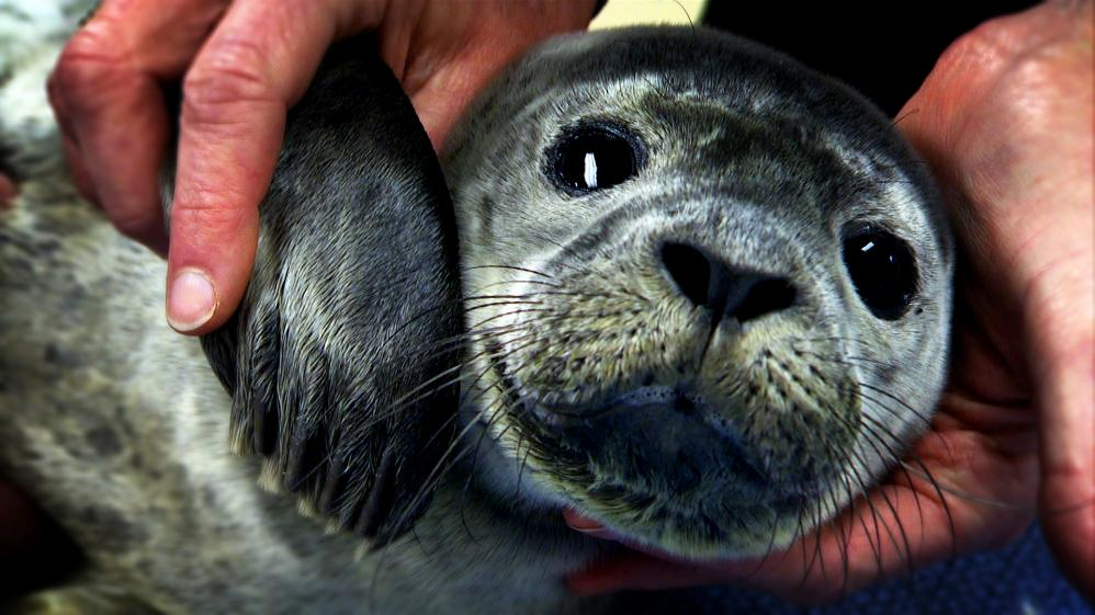 Hope for Wildlife - S1E4 - Chase the Seal