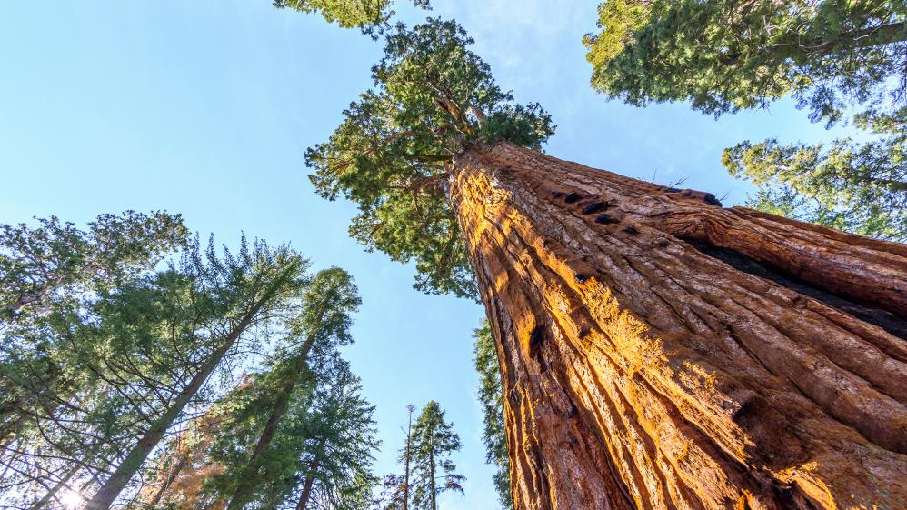 National Geographic Specials -  Redwoods: Anatomy of a Giant