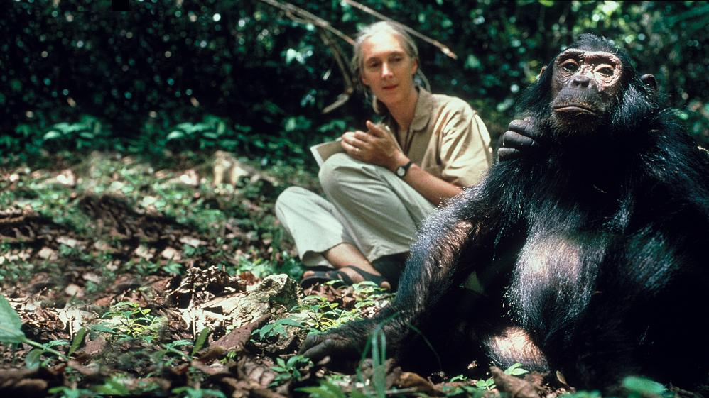 National Geographic Specials: Chimps on the Edge