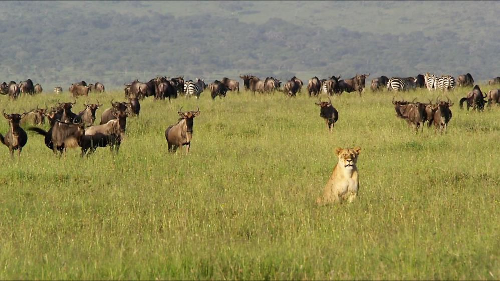 Nomads of the Serengeti - E1 - Journey to the Short Grass Plains