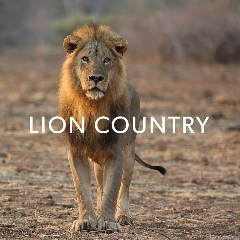 Lion Country: Night & Day