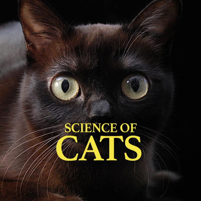 National Geographic Specials -  Science of Cats