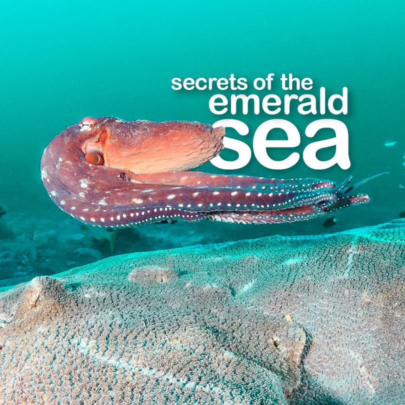 Secrets of the Emerald Sea
