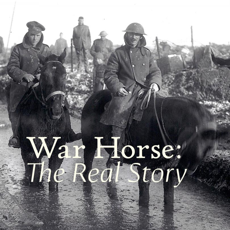 War Horse: The Real Story